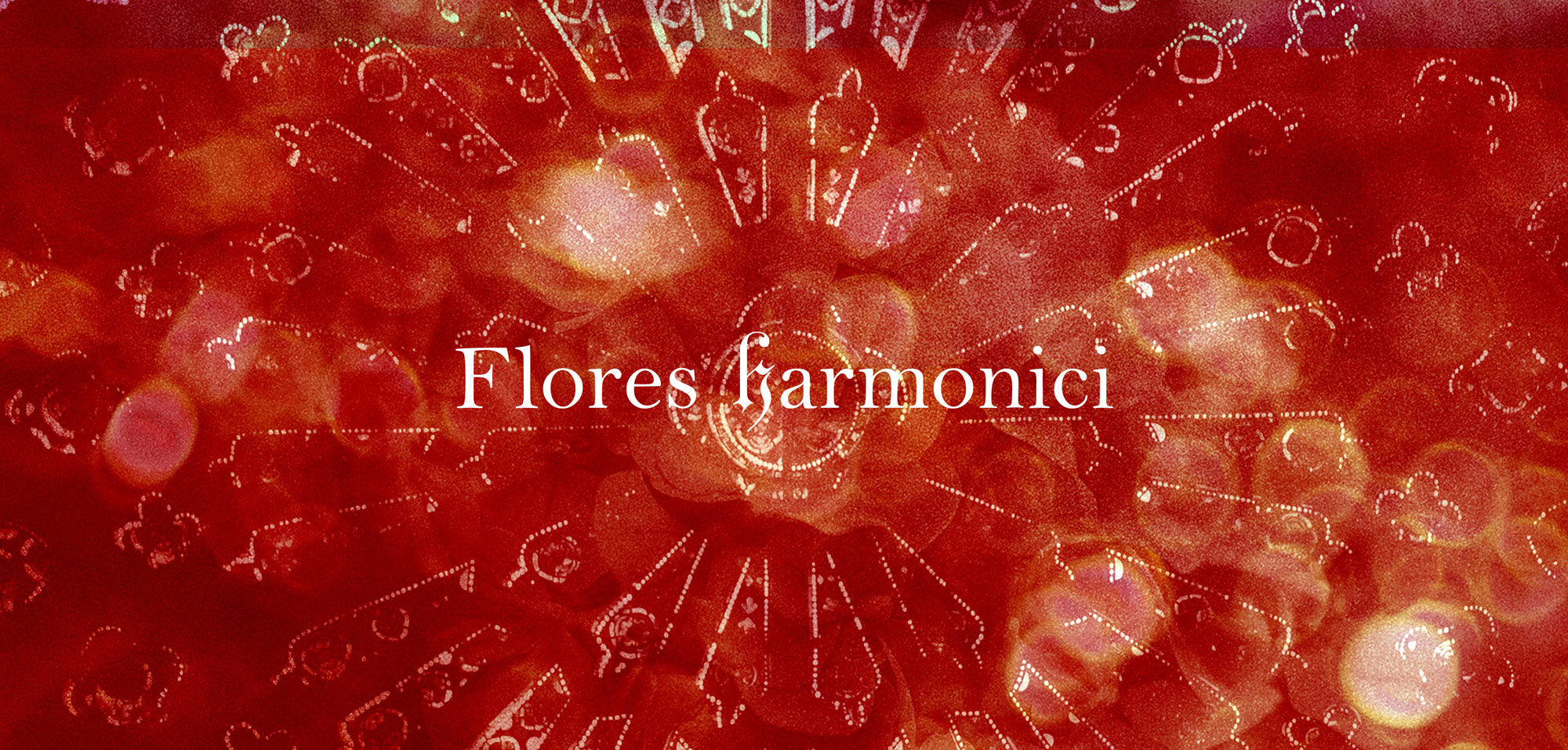 flores-harmonici-agence-ysEe-